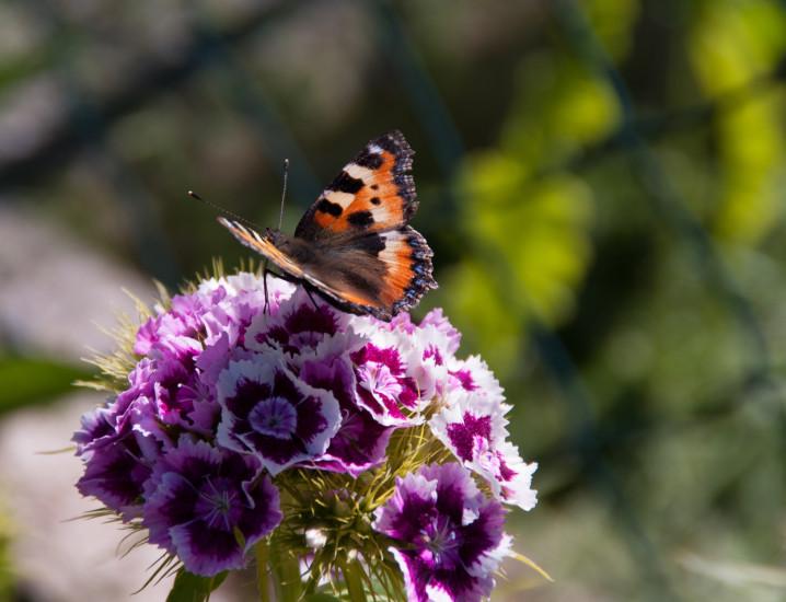 Hingabe an das Leben, sowie dieser Schmetterling auf dem Bild von Romana Huber