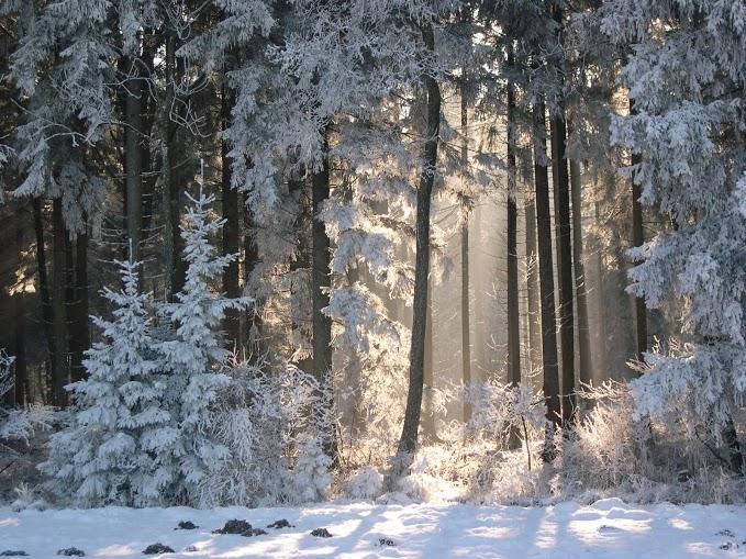 Winterwald am Flurnsbach im Natuschutzgebiet Grabensee