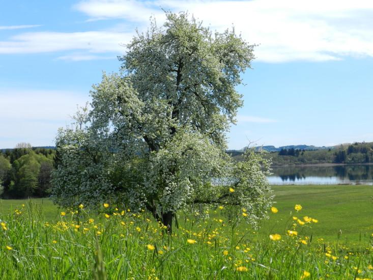 Blütenmeer und gepflegte Wiesen am Grabensee