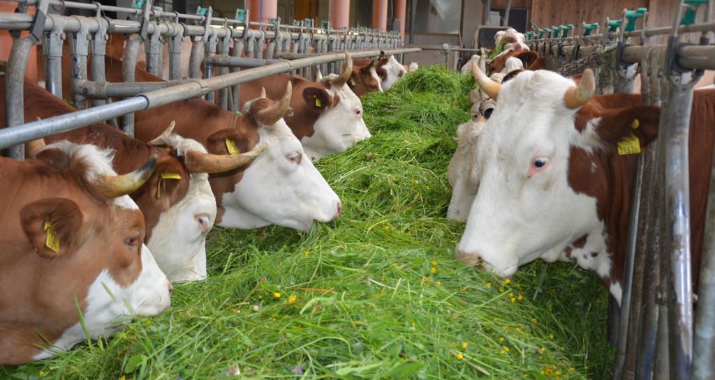 Bio-Heu-Region, unser Bauernhof (16)