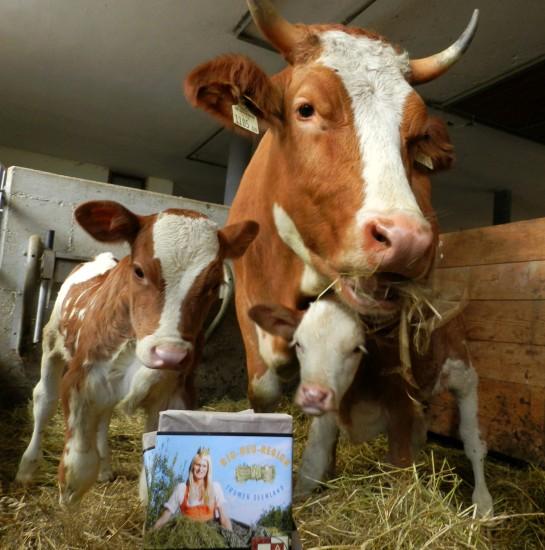 Unsere Kuh Enza mit ihren Zwillingskälbern und der Bio-Heumilch-Schokolade