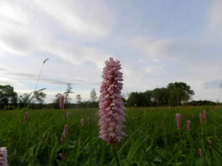 Bio Heuregion -Naturschutzgebiet Grabensee