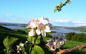 Blütenparadies Bio-Heu-Region 4
