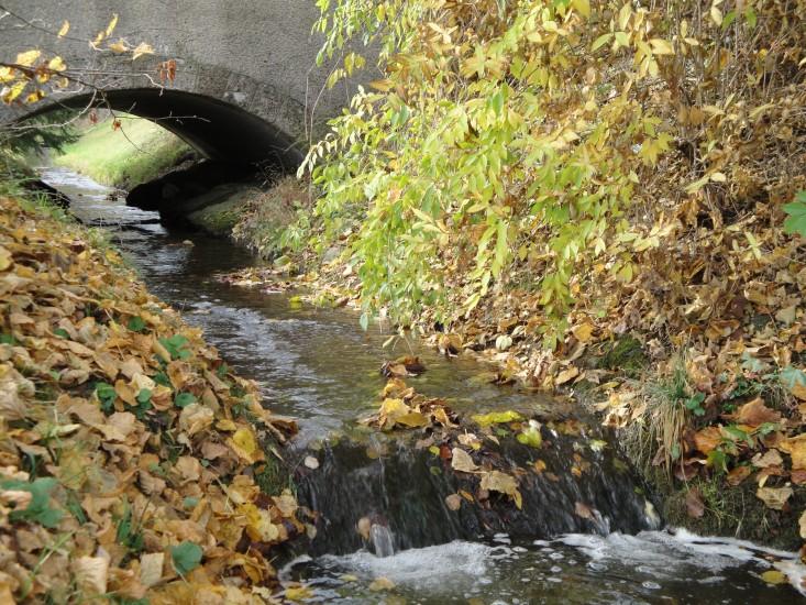 Leben im Fluss