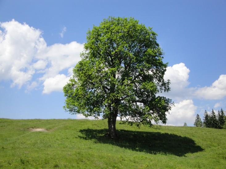 Bäume geben Kraft