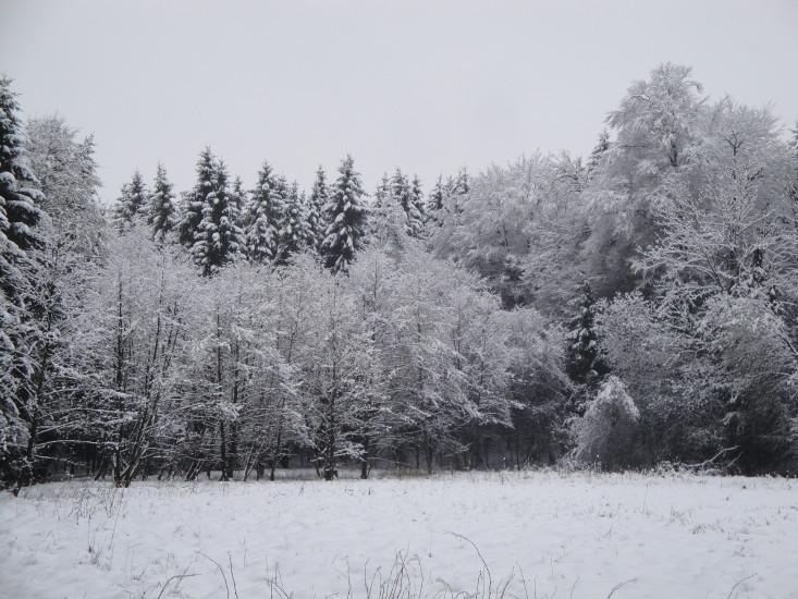 Winterwald Bio Heuregion