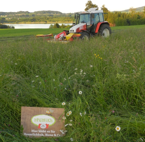 Zuerst muss das Gras gemäht werden, fotografiert im Mai 2014