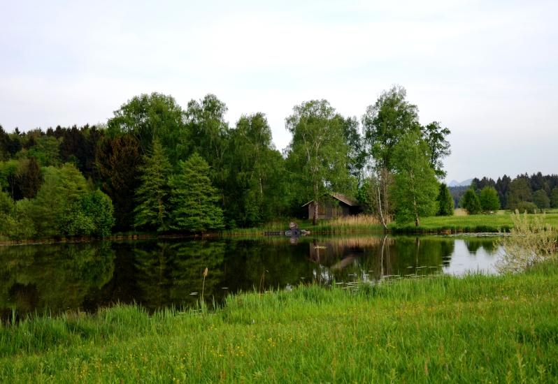 Naturparadies Egelseen in der Bio-Heu-Region - fotografiert im Juni um 18.22 Uhr