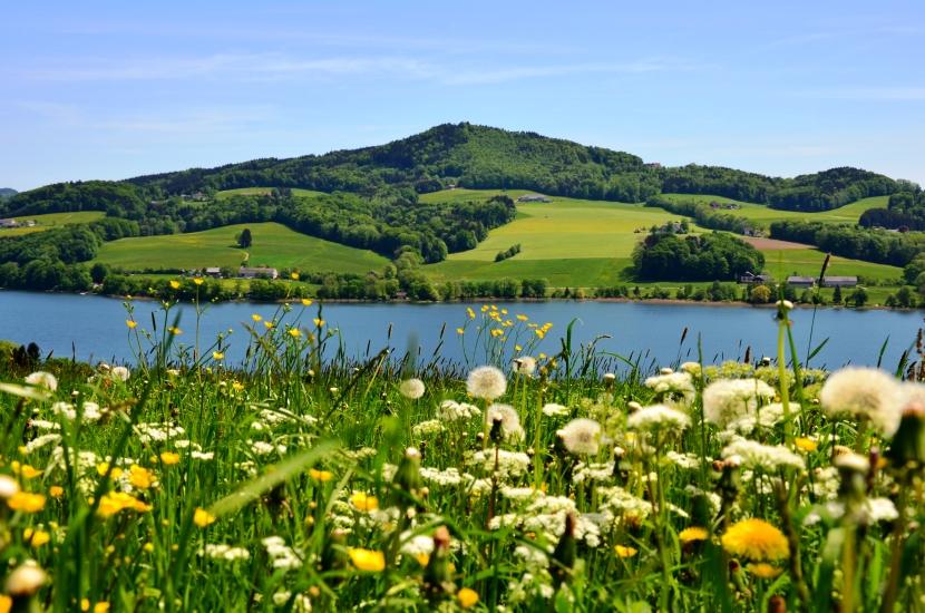 Blütenparadies in Seeham - fotografiert im Juni 2015