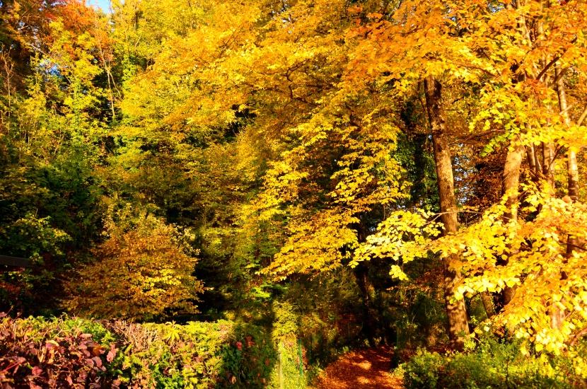 Goldener Herbst bringt Schönheit und Lebensfreude
