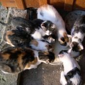 Katzen am Bauernhof 14