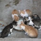 Katzen am Bauernhof