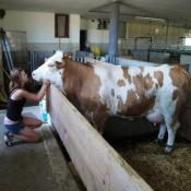 Unsere Tochter Maria mit Kuh Ida