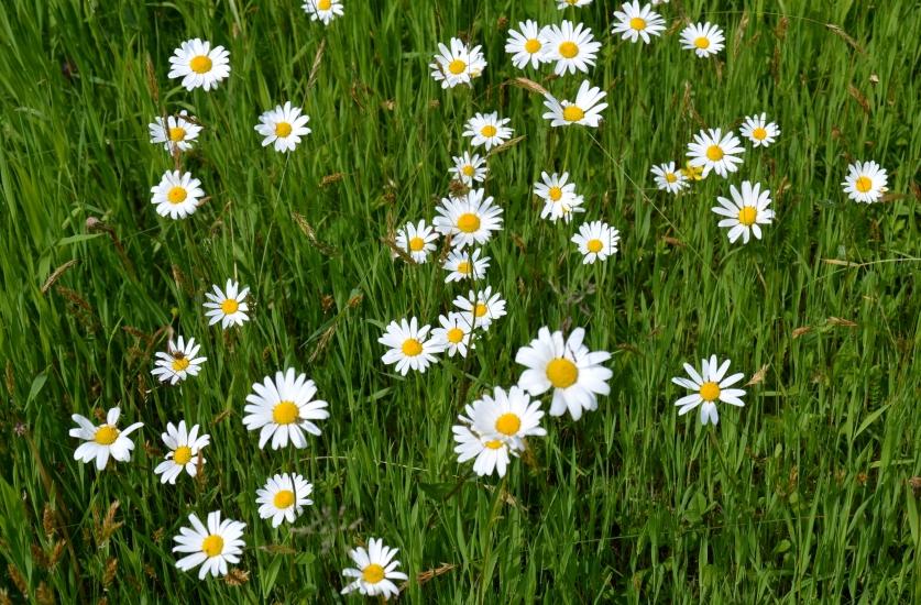 Blumen blühen hier bei der Linde am Thurn in der Gemeinde Berndorf