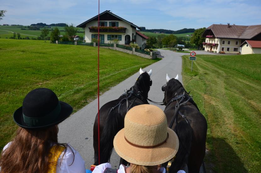 Pferdekutschengala 101
