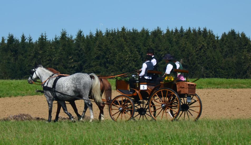 Pferdekutschengala 190