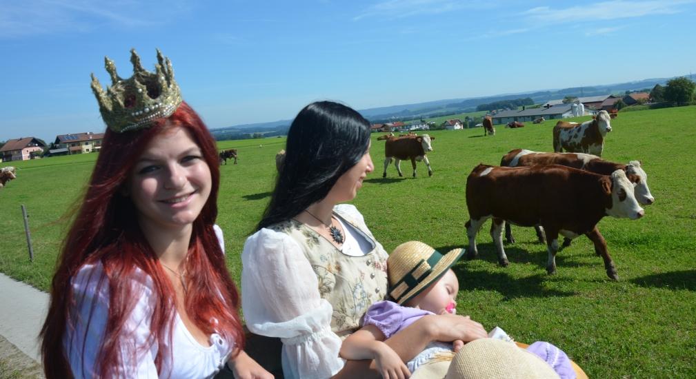 Bei der Fahrt durch die Berndorfer Landschaft liefen sogar die Kühe mit