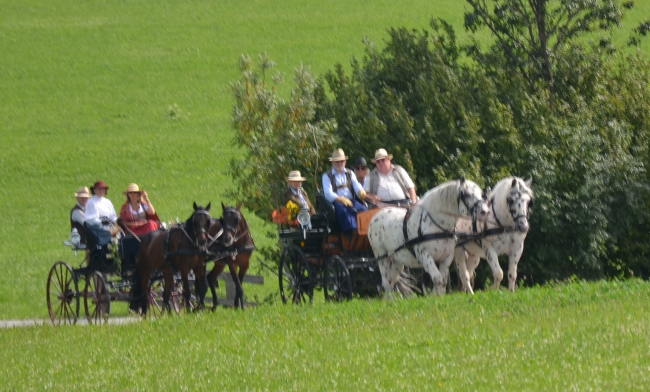 Pferdekutschengala 88