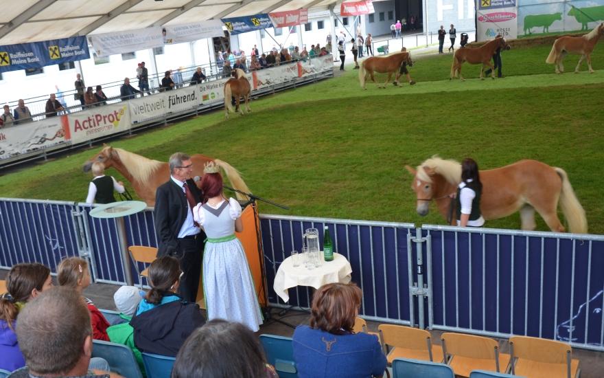 Tierschau des Österreichischen Pferdezuchtverbandes in Ried