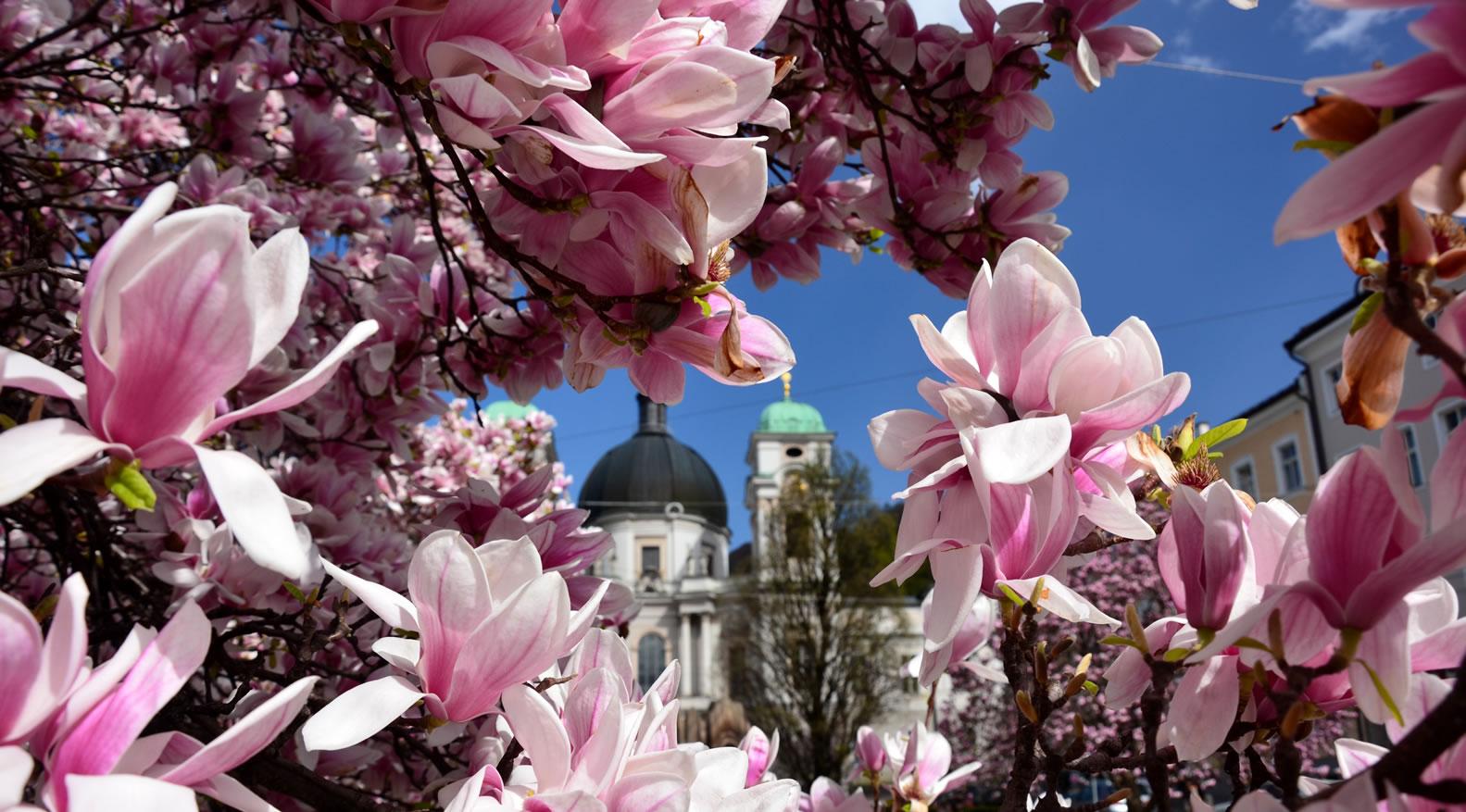 Salzburg im Frühling 18