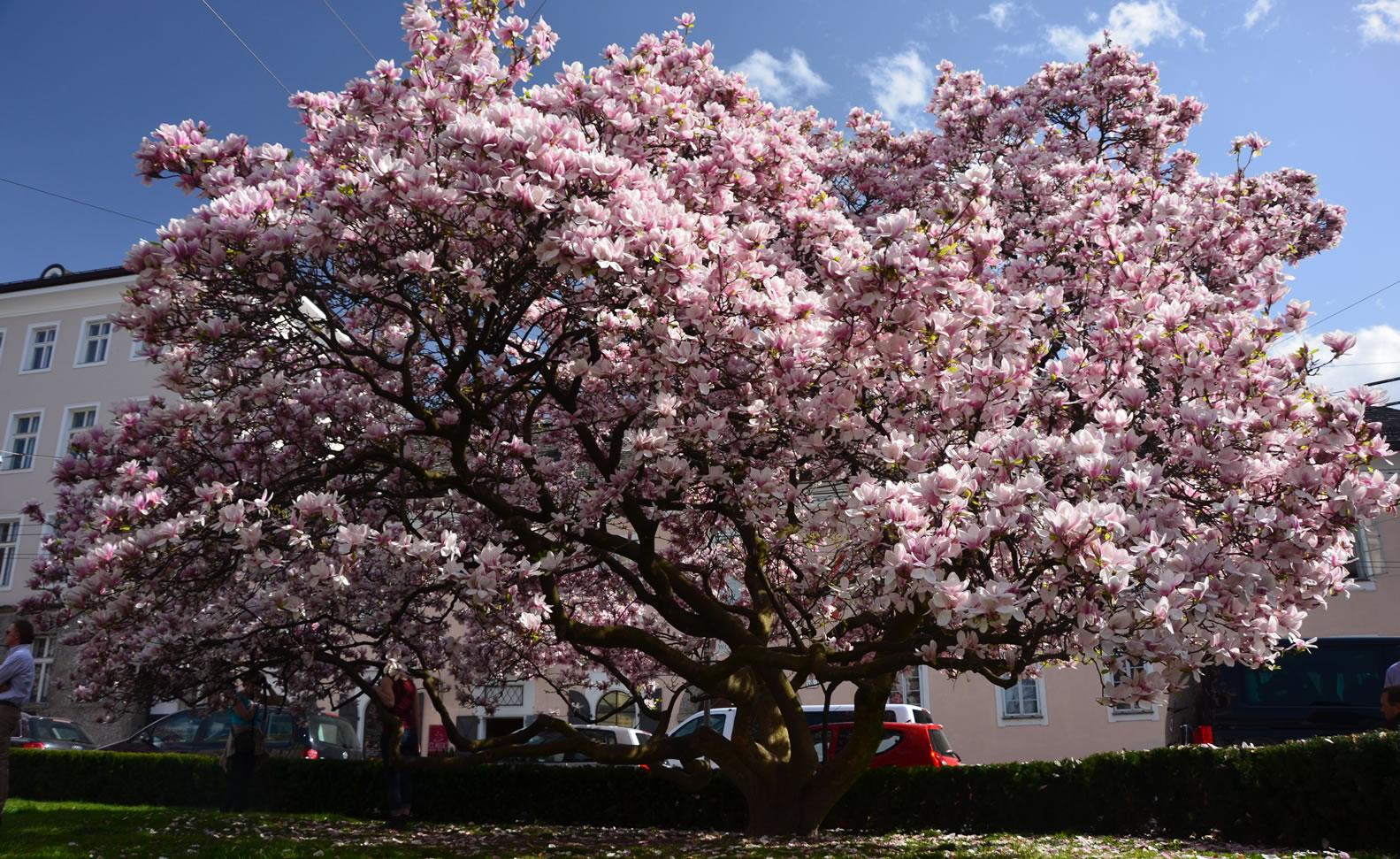 Salzburg im Frühling 65