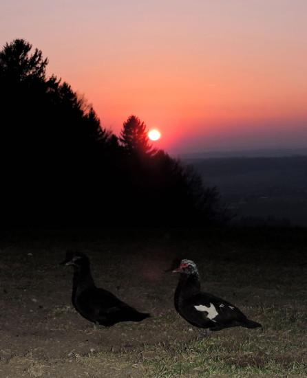 Sonnenuntergang 19 Bio-Heu-Region März 2015