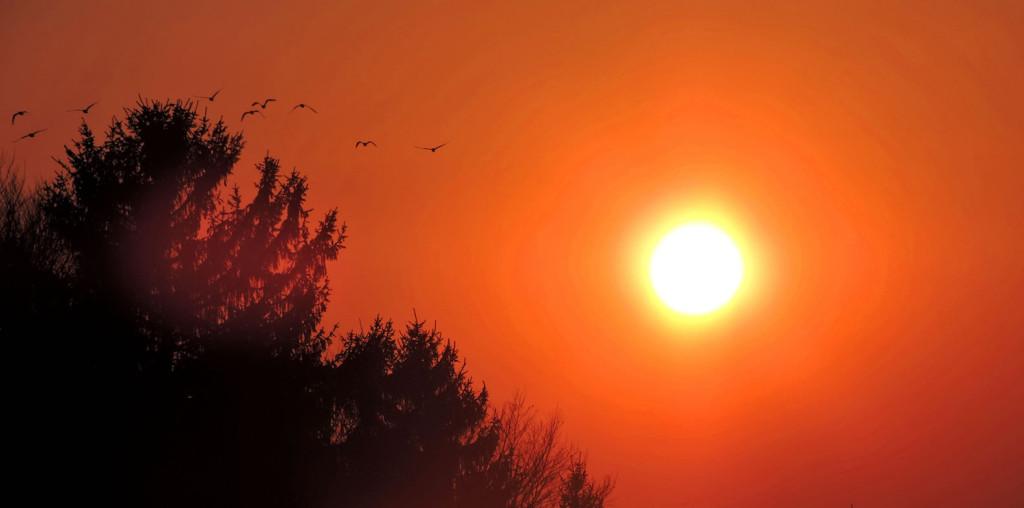 Sonnenuntergang mit Vögel Bio-Heu-Region März 2015