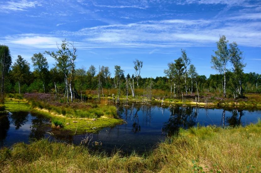 Foto von der herrlichen Naturlandschaft im Wenger Moor