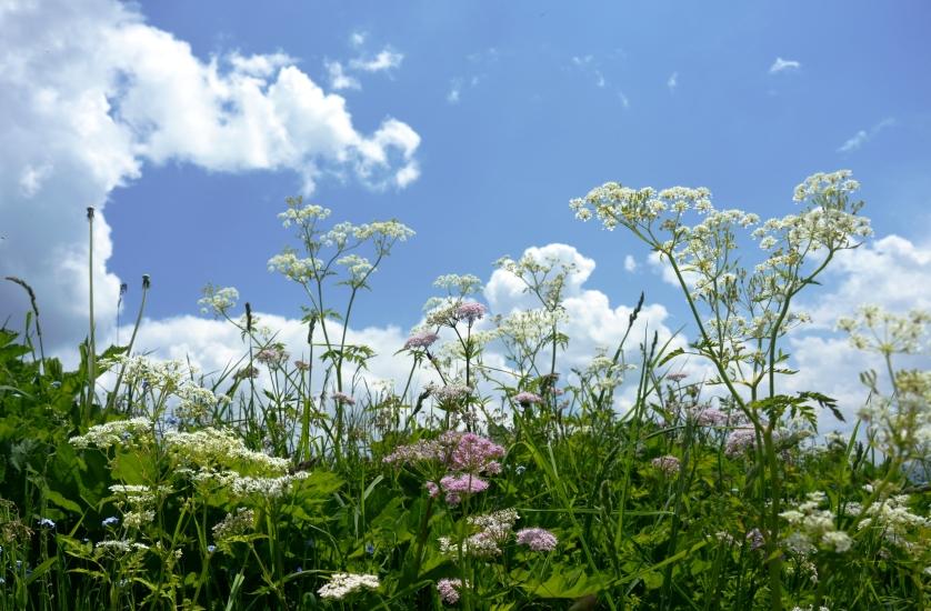 Blumenwiese und darüber ziehen die Wolken