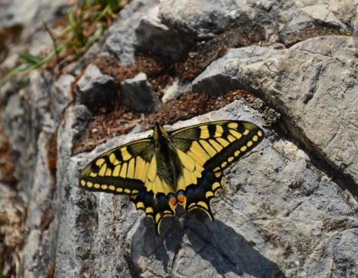 Wenn wir uns nicht mit anderen vergleichen, sind wir so frei wie dieser Schmetterling