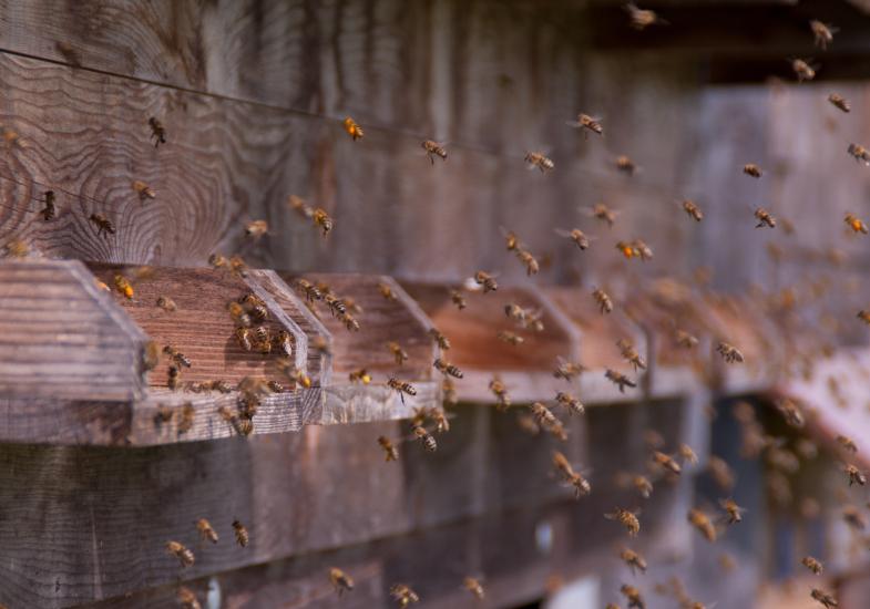 Bienen - Foto von Romana Huber