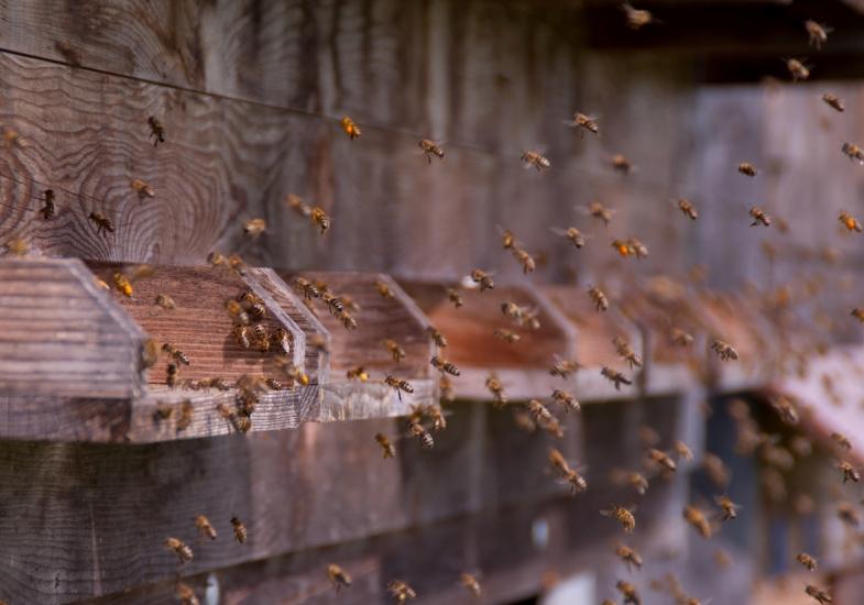 Bienen beim Anflug ins Bienenhaus, fotografiert von Romana Huber