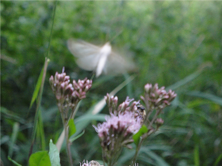 Schmetterling: Symbol für das Loslassen